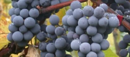 Trobada De Vins 2.0